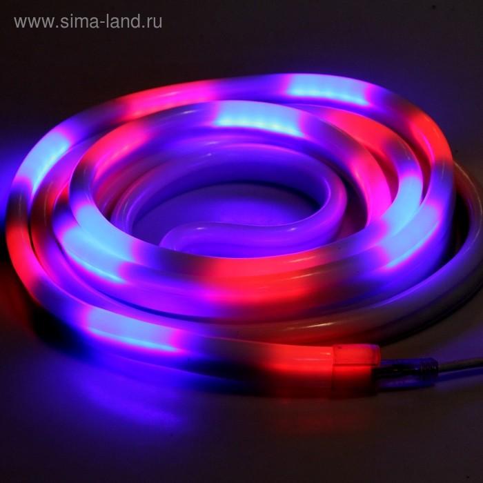 Гибкий неон 12 x 24 мм, 5 м. LED/м-80, 220V, МУЛЬТИ