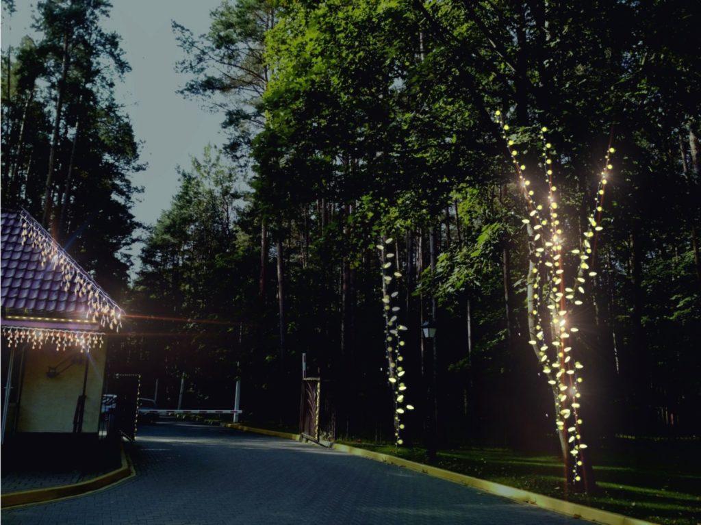 Новогодняя подсветка деревьев